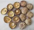 Agaricus a Ganoderma proti anémii u diabetu