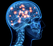 Cordyceps ochraňuje mozkové buňky před nedostatkem kyslíku