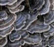 Existuje přírodní léčba rakoviny? Zkuste medicinální houby!