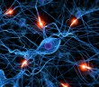 Hericium a znovuobnovení senzorických funkcí periferních nervů