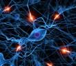 Medicinální houby a nervové buňky