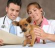 Medicinální houby ve veterinárním lékařství