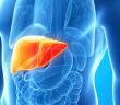 Shiitake v boji proti hepatitidě C