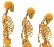 Vliv hub na kosti, houby proti osteoporóze