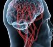 Vliv medicinálních hub na růst neuritů
