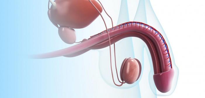 Reishi a zvětšená prostata vlivem androgenů