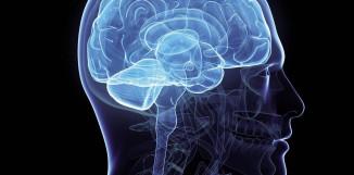 Coriolus ‒ ochrana mozku před degenerací