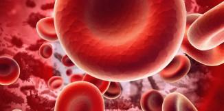 Reishi a protidestičkové, antiagregační působení.